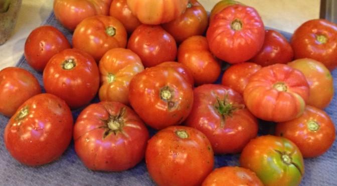 Farm Fresh Tomatoes In February